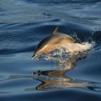 《海洋文學家_廖鴻基_大師講座》 海洋鯨靈 與 海洋探索