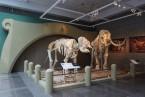 經典記憶再現 再見林旺與馬蘭  科博館與臺北市立動物園合作  讓林旺與馬蘭站起來!